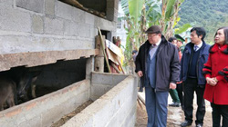 Chủ tịch Hội NDVN Thào Xuân Sùng bày mẹo chống rét cho trâu bò
