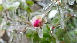 Dự báo thời tiết ngày mai 2/2: Hà Nội 9-12 độ, miền Bắc tiếp tục chìm trong rét đậm
