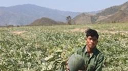 """Ở nơi khô hạn nhất Việt Nam, nông dân vẫn """"hốt bạc"""" vụ dưa hấu Tết"""