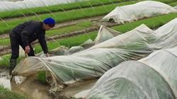 Thủ tướng yêu cầu 29 tỉnh trích ngân sách hỗ trợ nông dân chống rét