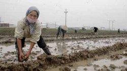 DN sốt ruột, nông dân lo thiếu phân bón vụ xuân vì… cấm đường