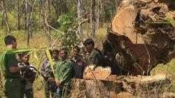 Xác định 15 đối tượng phá rừng Vườn quốc gia Yok Đôn