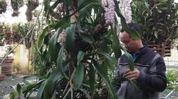 Xuất hành mùng 2 Tết: Lạc vào vườn lan tiền tỷ đẹp như mộng ở phố núi