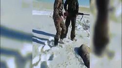 """Video: Chó sói bị """"bắn chết"""" bật dậy tấn công thợ săn"""