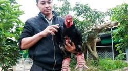 Đặc sản Tết: Chỉ cần alo, gà Đông Tảo VietGAP làm sẵn ship tận nhà