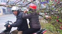 Đào bung nở 90%, người dân Lạng Sơn 29 Tết vẫn không mua được đào