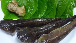 """MÓN NGON NGÀY TẾT: Cá bống bớp 300.000 đ/kg được chị em Hà thành """"săn"""" ăn Tết"""