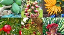 8 loại cây cho quả đem lại may mắn vào dịp Tết Mậu Tuất 2018