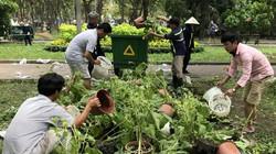 Ảnh-clip: Hàng trăm chậu hoa bị đập bỏ ở chợ hoa lớn nhất TP.HCM