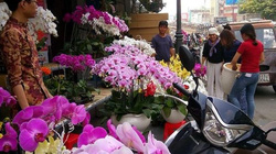 Tết Mậu Tuất 2018:  Người Việt chi 18 triệu USD mua hoa ngoại