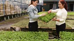 Chỉ ươm rau giống, trồng hoa mà gái đảm miền Tây thu 3 tỷ/năm