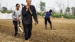 Đầu Xuân Mậu Tuất, nông dân xứ Nghệ khoắc cày lên vai trỉa lạc