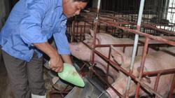 Hồi kết đẹp cho chủ trang trại lợn 12 tỷ gửi tâm thư cho Bộ trưởng