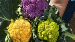 Những loại rau củ sặc sỡ sắc màu hợp trồng trong nhà để đón Xuân