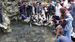 """40.000 người đi xem suối """"cá thần"""" ở xứ Thanh trong dịp Tết"""