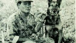 Năm Mậu Tuất kể chuyện chiến công của chú chó mang tên Eva