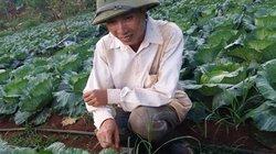 Tiết lộ bí quyết chỉ trồng rau cải bắp lãi hàng trăm triệu/năm