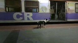 Chú chó tìm chủ ở ga tàu điện mỗi đêm khiến ai cũng nghẹn ngào