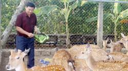Đột nhập trang trại nuôi hươu, nai lấy nhung lớn nhất ở Đồng Nai