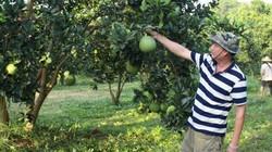 """Cuộc cách mạng nông nghiệp mới có tên """"Những nông dân kiểu mới"""""""