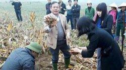 Trồng cây dược liệu, thu trăm triệu 1 ha