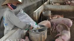 Giá heo hơi hôm nay 2/3: Dân nuôi lợn kêu trời vì nhiều doanh nghiệp đồng loạt tăng giá thức ăn