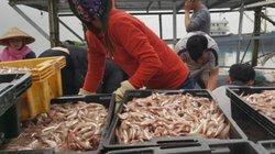 """Clip: 3 ngày ra khơi, ngư dân bắt về 600 tấn cá """"vàng"""" 4 tỷ đồng"""