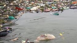 Nghệ An: Xác động vật hôi thối ùn ứ trên sông Đào
