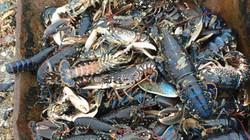 """Ngàn sinh vật biển chết rét hàng loạt vì """"Quái vật phương Đông"""""""
