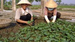 Tăng quyền, lợi ích cho phụ nữ nông thôn