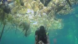 """Kinh hoàng cảnh biển Bali bị con người làm cho """"nghẹt thở"""""""