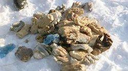 Phát hiện 54 bàn tay người bị chặt lìa trên tuyết ở Nga