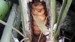 Nổi da gà với những món đặc sản của người dân vùng cao Nam Trà My
