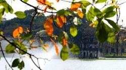 Mùa lộc vừng thay màu lá đẹp ngỡ ngàng ở Hồ Gươm