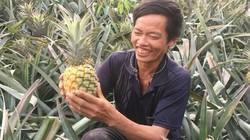 """Lão nông người Mông trồng cây ra quả """"trăm mắt"""", lãi hàng trăm triệu"""