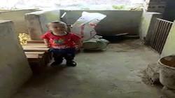 Màn đấu khẩu cực đáng yêu của em bé Bắc Giang và chú chó