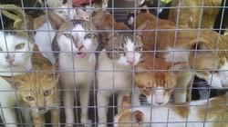 Khu chợ bán thịt mèo ở Việt Nam lên báo Anh
