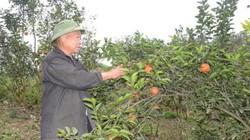 Tổ dân phố xây biệt thự, thu tiền trăm triệu nhờ trồng cam VietGAP