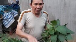 Lão nông vùng cao U70 khởi nghiệp với cặp hươu giống