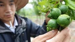 Úc cam kết hợp tác phát triển ngành công nghiệp mắc ca Việt Nam