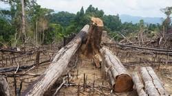 Vụ phá rừng phòng hộ Tiên Lãnh: Xử lý hàng loạt lãnh đạo kiểm lâm