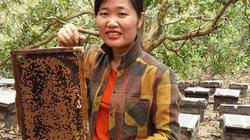 Gái đảm cao nguyên lãi hơn trăm triệu/năm từ đàn ong mật