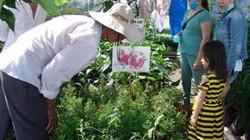 Festival VTNN Vĩnh Long: Hàng vạn cây giống đặc sản được lùng mua