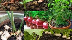 5 loại rau củ vừa là thức ăn vừa là thảo dược nên trồng trong vườn
