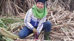 """Nông dân trồng mía ở Sơn La yên tâm nhờ có """"bảo hộ"""""""