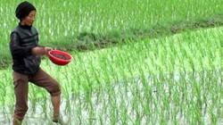ThaiBinh Seed đồng hành nhà nông chăm sóc lúa xuân