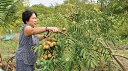 Trồng xen cóc với dừa, đất không thừa lại thêm vài triệu/tháng