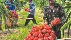 Những lưu ý mới nhất khi xuất khẩu hoa quả sang Trung Quốc
