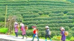 """Ghé thăm """"đệ nhất làng trà"""" - Nơi sản xuất ra trà Long Tỉnh trị giá hàng trăm triệu đồng/kg"""