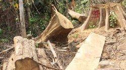 Tan nát rừng phòng hộ Sông Kôn:Xử lý nghiêm kẻ tiếp tay cho lâm tặc